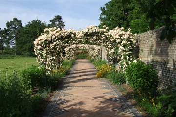 A rose walk garden design in Brenchley near Tonbridge